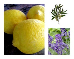 lemon lavender tea tree